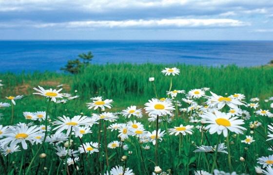 들국화꽃에 대한 이미지 검색결과