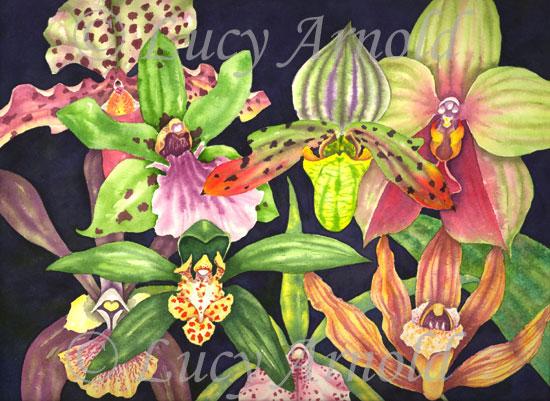 48e8eae17d71b&filename=Orchids.jpg